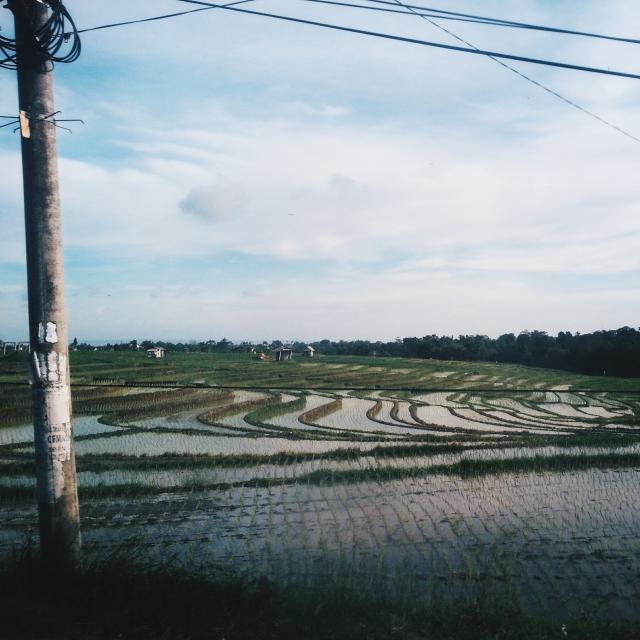Bali Rice Paddy Field
